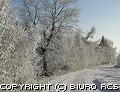 Zima - Szron na drzewach (-20 st. C)