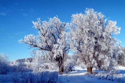 Gratis vinterbilder